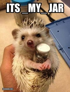 This is just like my hedgehog. He is adorable when he holds his jar like this hedgehog.