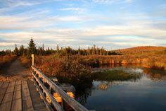 Three Fantastic Fall Hikes in Saranac Lake Carnivorous Pitcher Plant, Saranac Lake, Blueberry Bushes, Lake Champlain, Bouldering, Travel Around, Pond, Hiking, Fall
