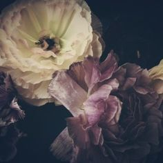 Radiant - Limited edition photography by Ashley Woodson Bailey