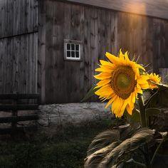 Always follow the sun...