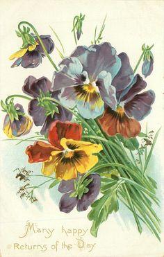 Multi-colored pansies, 1909.