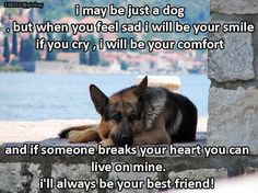 The German Shepherd and all animals...an animal's unconditional love!