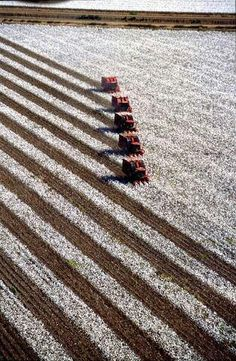 This beautiful picture from the  #Cottonfields in #WestTexas is a perfect example how #farm #mechanization has not only reduced the time taken in #harvest but, has also brought #precision #farming to the fore.  tafe.com | tafecafe.org