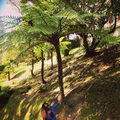 #playharder Fresh Green   #botanicalgardens #botanical #green #wellington #wellingtonnz #tree #trees #nature #wonderful_places #newzealand #nz #travel #instatravel #traveller #travelling #fresh #love #bucketlist #instapic #roots #bucketlist #raraontour #beautiful #pretty #garden #world #worldtraveller #inspiration #living by 15rara