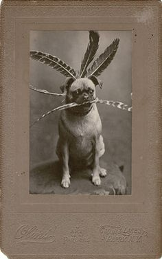 Vintage pug -- sadly, no further info given on the photo or source.