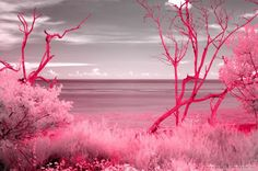 pretty in pink landscaping | pink landscape