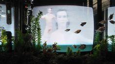 Nam June Paik — Video-fish (Poissons-video), 1979-92 Nam June Paik, Light Installation, Art Installations, Daydream, Art Inspo, Art Projects, Fish, Sculpture, History
