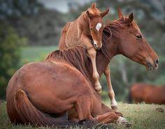 Baby horse hugs.