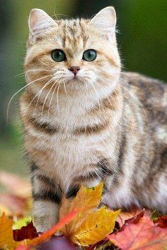 Adorable! Via Meow -fb