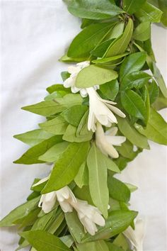 Maile lei entwined with tuberose