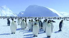 antarctic ecosystem - Google Search