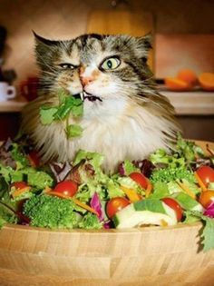 OM NOM NOM NOM! I am Salad-zilla, lord of the Lettuce People!