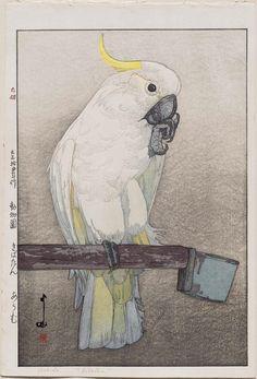 Kibatan Parrot (Kibatan ômu), from the series Zoo (Dôbutsuen) | Museum of Fine Arts, Boston