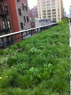The High Line backlash   Garden Rant