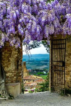 San Gimignano, Tuscany, Italy Loved, Loved this spot last fall. Beautiful World, Beautiful Gardens, Beautiful Flowers, Beautiful Places, Siena Toscana, Tuscany Italy, Sorrento Italy, Italy Italy, Naples Italy