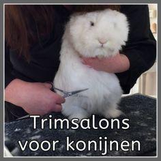 Problemen met de vacht van je konijn? Bijvoorbeeld klitten, een vieze kont of is je konijn toe aan een professionele knipbeurt? Hier vind je een lijst van trimsalons voor konijnen in Nederland en België.
