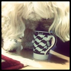 Bobeou perdeu cumpadi! :) #cao #cão #cachorro #dog #dogs
