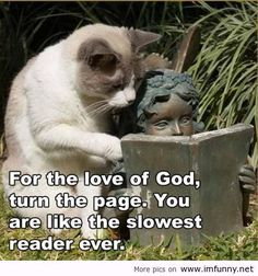 Top 40 Funny animal picture quotes #very funny