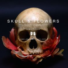 Skull & Flowers PDF Format for downloading to your mobile devices. Copyright Free Artist References 30 High Resolution Images all 300.0 dpi PDF Size - 87MB (Photographs by Ryan Moon) -Terms of agreement- The following is a legal agreement between You and the owners and operators of ubproductions.com (Website). By using the Website You agree to be bound by the terms of this Agreement. If You do not agree with the Terms of Use, You should leave this Website. This agreement may be revi...