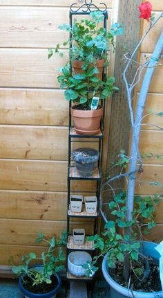 """Old CD tower """"upcycled"""" into a mini patio herb garden."""