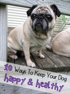 10 ways to keep your #dog happy and healthy.