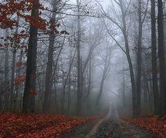 honeymoon trail  lutsen, mn. This looks hauntingly beautiful #MSPGetaway