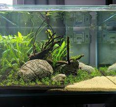 """43 Likes, 4 Comments - @adrians_aquatics on Instagram: """"New aquascape #aquascape #aquscaping #natureaquarium #aquarium #aquariumsofinstagram #dennerle…"""""""