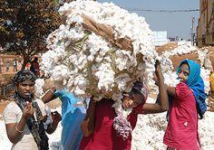 Child Labour + Cotton