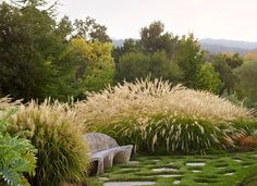 Northern California Garden Weaves In Couple's Cultural Traditions Grass For Sale, Privacy Plants, Prairie Garden, Coastal Gardens, Garden Landscape Design, Desert Landscape, Home Landscaping, Garden Features, Ornamental Grasses