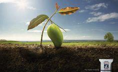 Viking Fertilizer: Mango