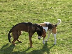 How to Get Rid of Fleas on Dogs With Home Remedies