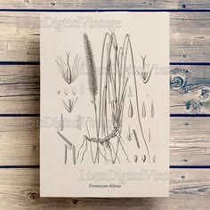 #LizasDigitalVintage Instant download print Botanical print by LizasDigitalVintage