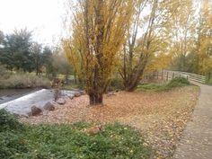 #Otoño en el #Parque del #Iregua en #Logroño, #La Rioja, #España