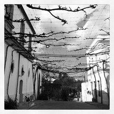 Instameet Andalucía.  Wineries.  Bodegas González Byass.  Foto: @alcaucil