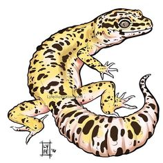 Just one of the many Leopard Gecko color morphs there are! I'm starting to do some reptile art in preparation for the @reptilesupershow in Pomona January 7/8th! I have a table for my art and chameleon babies @lyfechameleons  This was done with my handy dandy Intuos pro @Wacom tablet on @autodesksketchbook pro