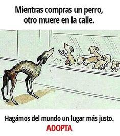 #adopta #adoptanocompres #adopción #perro #LealesOrg  https://www.instagram.com/p/BcwafwhhNue/ https://scontent.cdninstagram.com/t51.2885-15/e35/25010774_153121795452022_1348226775796154368_n.jpg