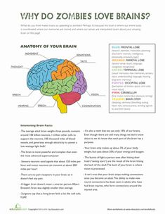 Why do zombies love brains? Find out with this collection of fun facts and a colorful diagram of the brain.