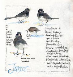 Illustration / Sketching in Nature: Winter bird sketching Moleskine, Sketchbook Layout, Sketchbook Ideas, Bird Sketch, Nature Sketch, Watercolor Bird, Watercolor Journal, Nature Journal, Bird Drawings