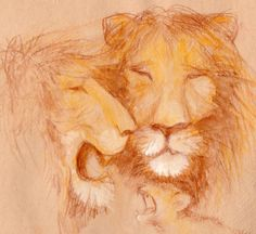 studi leoni