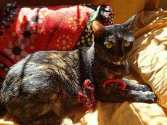 Esta gatita llevaba meses en un barrio de Sevilla. Algunos vecinos la alimentaban pero en cambio otros... #adoptar #mascotas #adopcion #perros #gatos