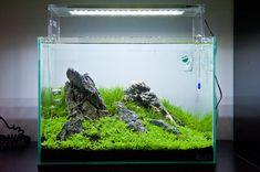 Amano / ADA style Nature aquarium