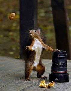 Squirrel can't believe his eyes!