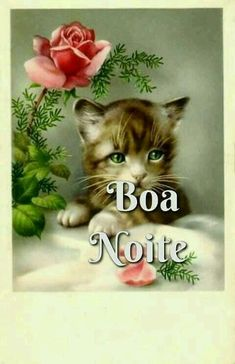 Good Night Quotes, Vintage Pictures, Animals And Pets, Cats, Portuguese, Dreams, Memes, Photos Of Good Night, Good Night Msg