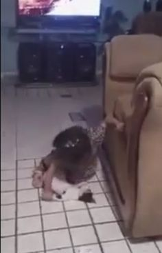 Mexico City Woman Posts Video Of Her Daughter Abusing A Cat! Police Does Nothing! Demand Punishment! | PetitionHub.org