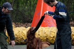 get more free 5 day dog training articles http://FreeDogTraining.bestonlineproducts.net/