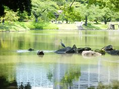 Koishikawa Korakuen Garden May 21 2016