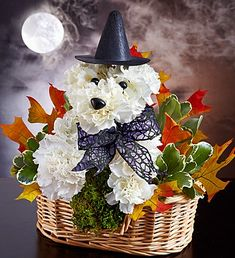 Witchy Pooch! Halloween flowers for dog lovers