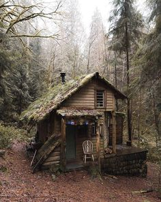 Cabin of the day