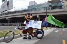 TC Bear has the coolest bike!