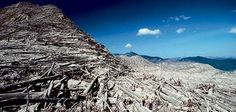 mt st helens pictures | Mount St. Helens, Washington | Evotourism | Smithsonian Magazine